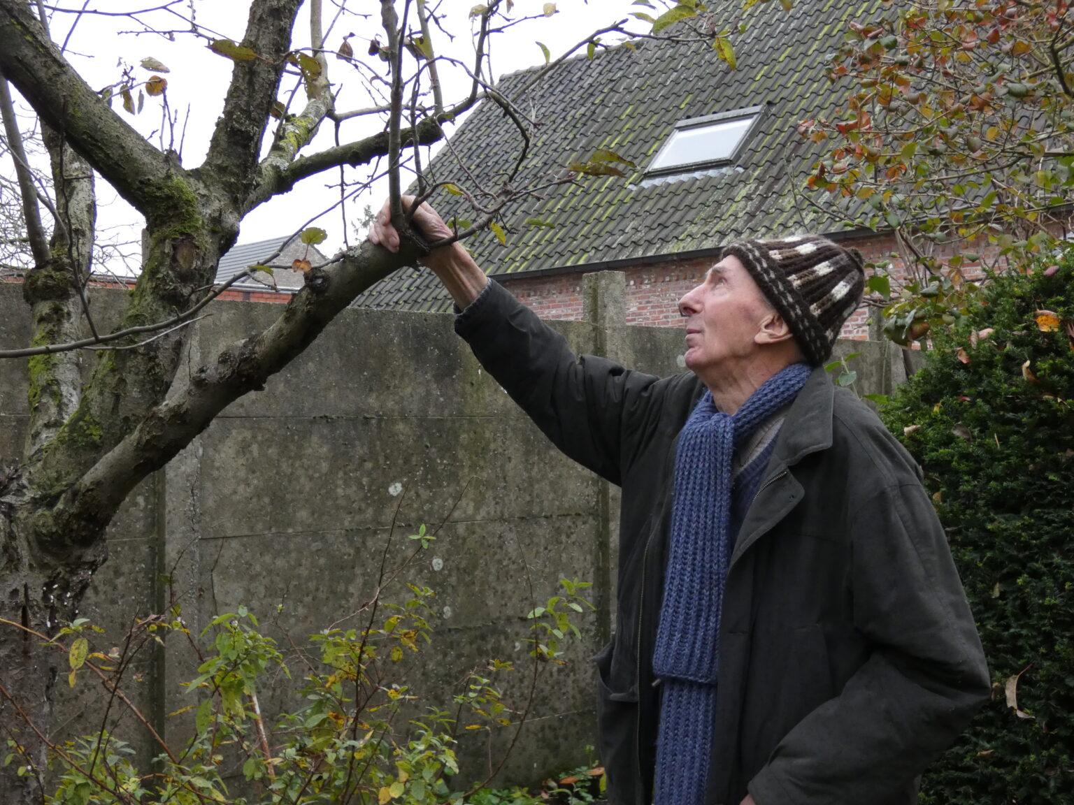 Bomen enten