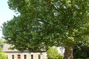 Plataan hoeve Kalken (c) Onroerend Erfgoed Van der Linden Geert